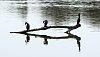 -cormorants-2-7355.jpg