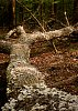 -20200409-tree-fungus.jpg