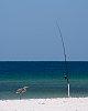 -fishing-bird-sm.jpg