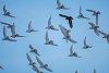 -pigeons-sm.jpg