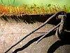 -cast-iron-moss-sm.jpg