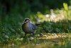 -gray-catbird-bug-dark.jpg