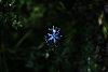 -blue-star.jpg