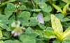 -butterfly-sm.jpg