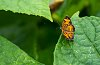 -pearl-crescent-butterfly-sm.jpg