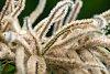 -chestnut-blossoms-sm.jpg