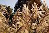 -reeds-.jpg