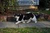 Cool Cat-cat2.jpg