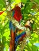 -birds1.jpg