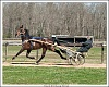 Hard Working Horse-horse-training-1.jpg