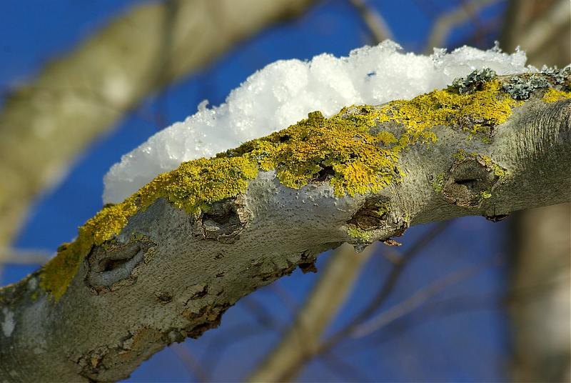 Name:  Lichens5775 sm.jpg