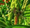 -dragonflyedit.jpg