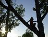 -tree-monkey.jpg
