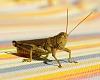 -grasshopper1.jpg