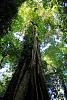 -tall-tree-3.jpg