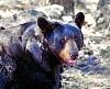 -bear.jpg