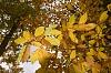 -autumn-comes.jpg