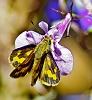 -orchids.jpg