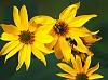 -bees.jpg