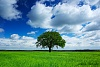 Picture of a lonely tree-602_baumbilder2.jpg