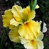 -yellow-2.jpg