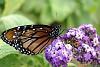 -butterfly-4.jpg