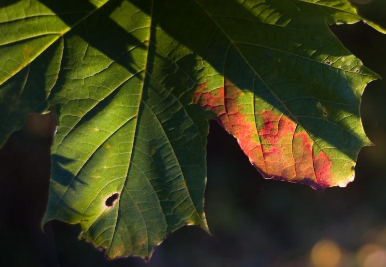 Name:  October 3.jpg Views: 1141 Size:  46.7 KB