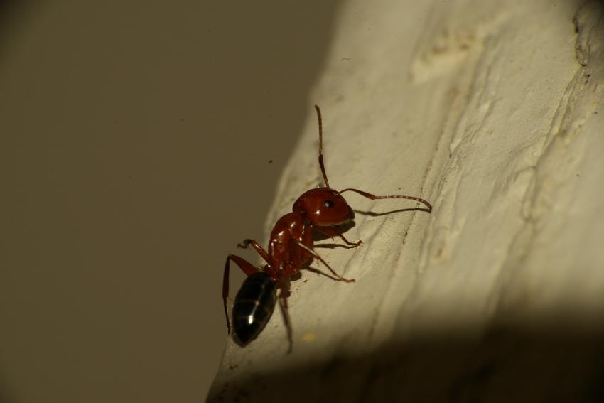 Name:  Bugs 025.jpg