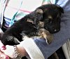 -imgp0663-puppy.jpg