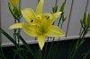 -imgp1100-flower-sooc-40mm-xs-06-29-20.jpg