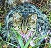 -cat-9451-3.jpg