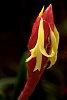 -orchid-blossom-2014-s_dca8680-3.jpg
