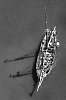 -_dca8843-sailing-ship-walkway-b-w-rs.jpg