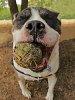-duke-ugly-ball-_img3365.jpg