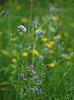 -narrow_dof_wildflowers_spring_2020_cpr1_40-crop.jpg