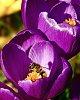 -bee-flower.jpg