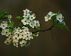 -1-6-spring-blossoms-8x10-smaller.jpg