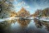 -willow-tree-cassiobury-park.jpg