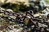 -chained-rock-3.jpg.jpg