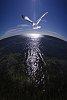 -seagull-1a.jpg