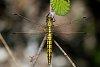 -dragonfly.jpg