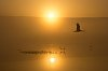 -cranes-sunrise-2.jpg