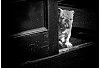 -guard-dog.jpg