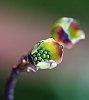 -magnolias-06.jpg