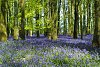 -docky-wood-bluebells-pentaxforums-comp.jpg
