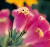 -flower-baby-pentax.-1a.jpg