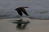 -goose-liftoff.jpg