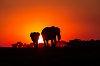 -african_sunset.jpg