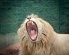 -liontamer.jpg