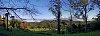 -valley-ferns.jpg